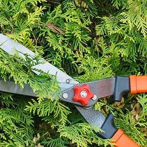 Baumschnitt-Strauchschnitt-Heckenschnitt