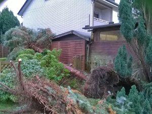 Versicherungsschaden – Garten nach Sturmschaden (vorher)